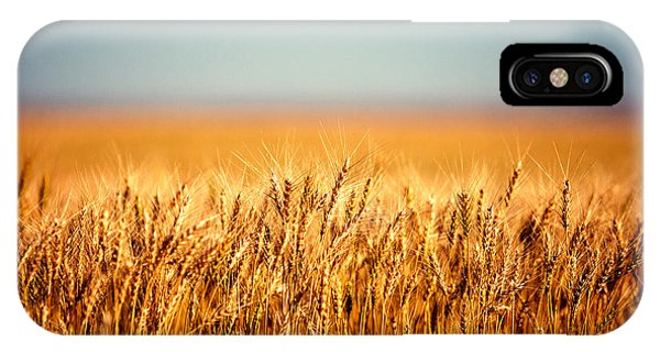 Amber iPhone Case - Field Of Wheat by Todd Klassy