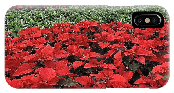 Fields Of Poinsettias IPhone Case