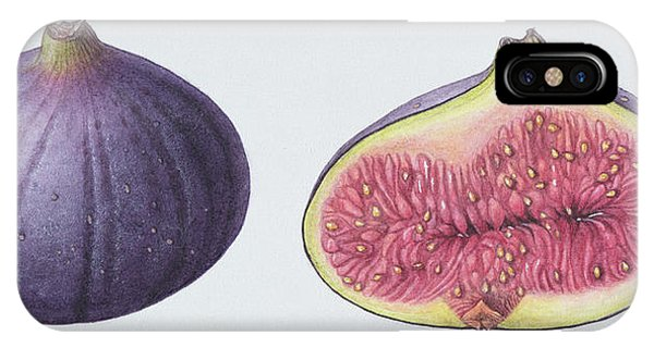 Organic Foods iPhone Case - Figs by Margaret Ann Eden