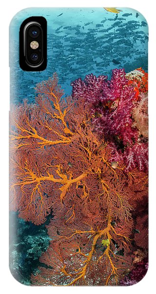 Fiji Fish And Coral Reef Phone Case by Jaynes Gallery