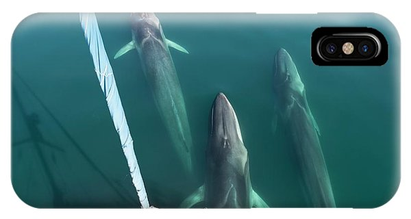 Catamaran iPhone Case - Fin Whales Bowriding by Christopher Swann