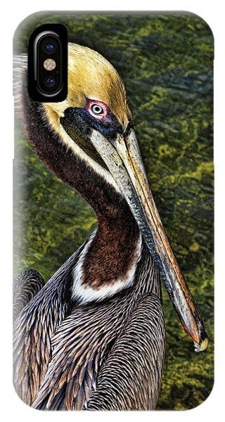 Pelican Close Up IPhone Case