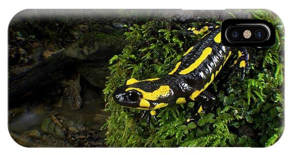 Salamanders iPhone Case - Fire Salamander (salamandra Salamandra by Andres Morya Hinojosa
