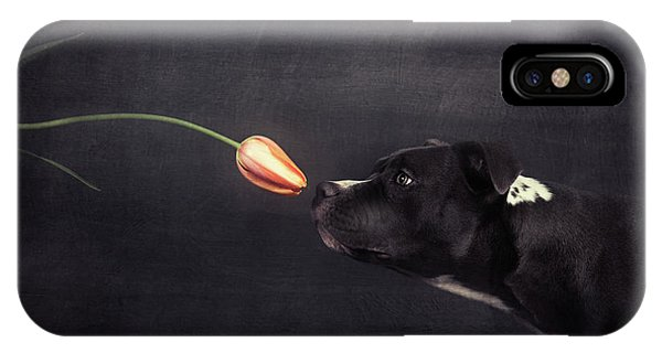 Pitbull iPhone Case - First Approach - Hildegard And The Tulip by Heike Willers