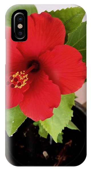 First Bloom IPhone Case