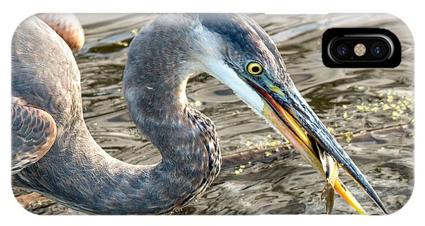 First Catch Of The Day - Blue Heron Phone Case by Doug Underwood