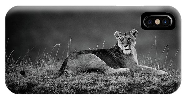 Lions iPhone Case - First Lady by Mohammed Alnaser