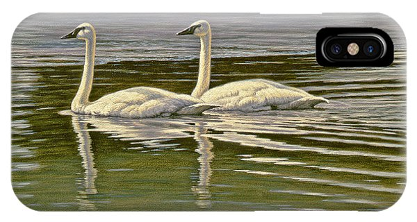 Swan iPhone Case - First Open Water - Trumpeters by Paul Krapf