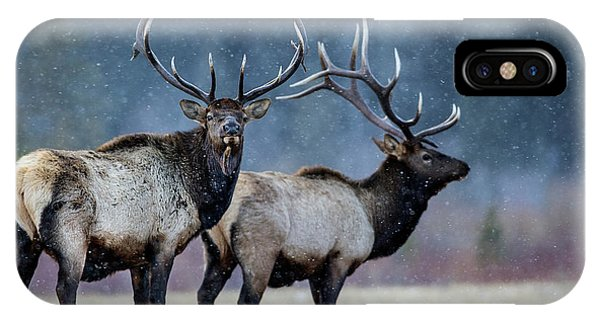 Stag iPhone Case - First Snow by Verdon