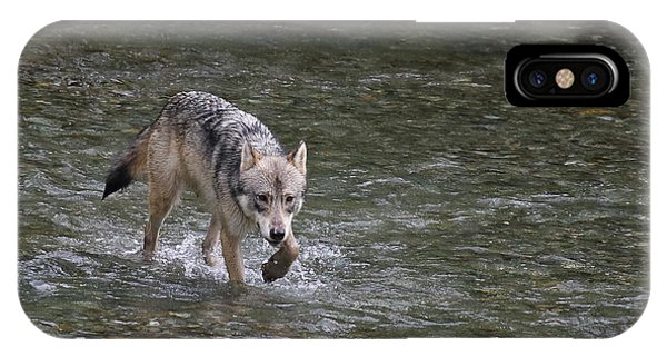 Fish Creek Wolf IPhone Case