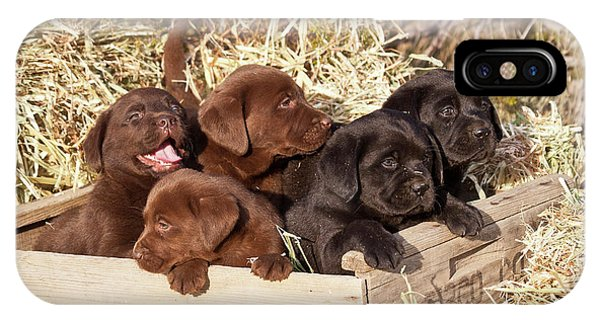 Five Labrador Retriever Puppies IPhone Case