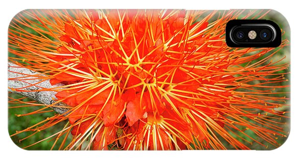 Belize iPhone Case - Flame Of Panama Flower (brownea by William Sutton