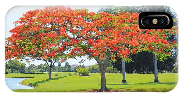 Flame Tree IPhone Case