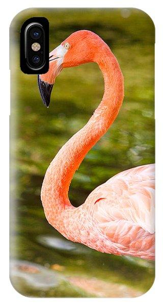 Flaming Flamingo IPhone Case