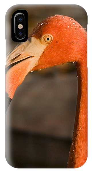Maya iPhone Case - Flamingo by Adam Romanowicz