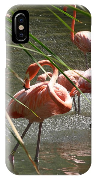 iPhone Case - Flamingo Group by Anthony Forster