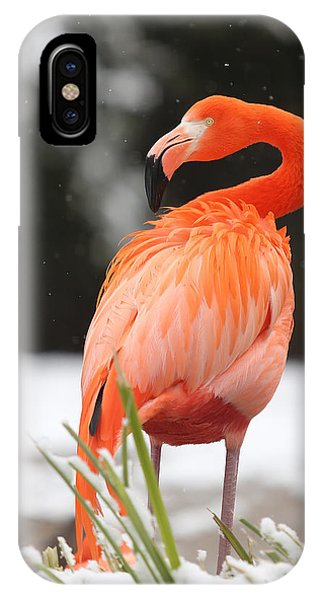 Flamingo In Snow IPhone Case