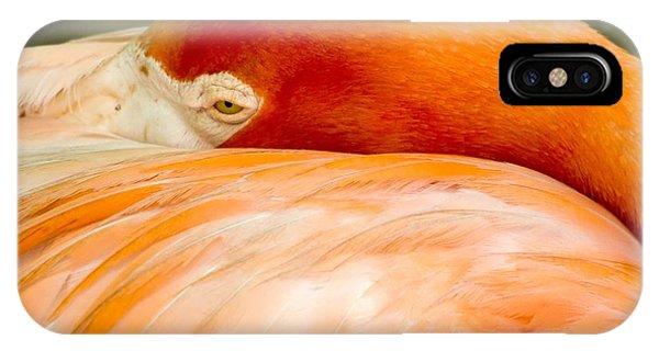 Flamingo Napping IPhone Case