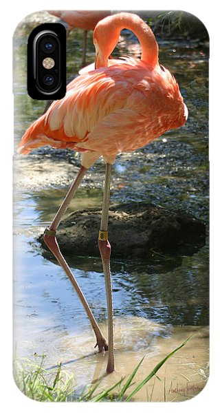 iPhone Case - Flamingo Stand Off by Anthony Forster