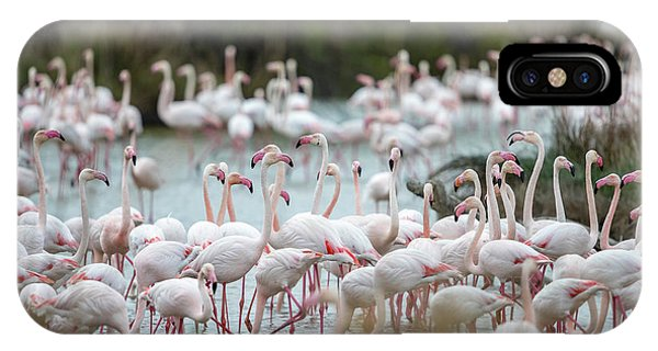 Flamingoes In Swamp Phone Case by Raffi Maghdessian