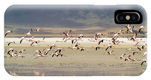 In Flight iPhone Case - Flamingos Flying Over Water by Jonathan Kingston