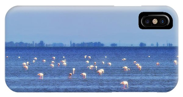 Flamingos In The Pond IPhone Case