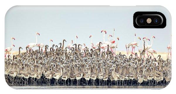 Delta iPhone Case - Flamingos Nursery by Joan Gil Raga