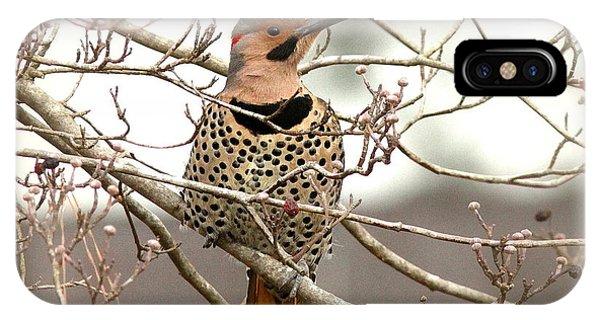 Flicker - Alabama State Bird - Attention IPhone Case