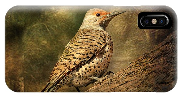 Northern Flicker iPhone Case - Flicker In A Tree by Donna Kennedy