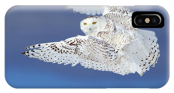 Escape iPhone Case - Flight Of The Snowy - Snowy Owl by Jim Cumming