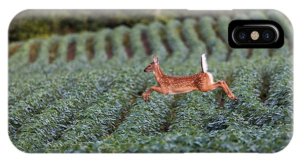 White Tailed Deer iPhone Case - Flight Of The White-tailed Deer by Everet Regal