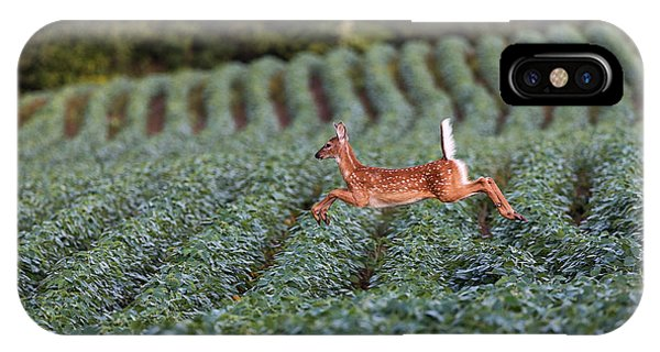 Deer iPhone Case - Flight Of The White-tailed Deer by Everet Regal