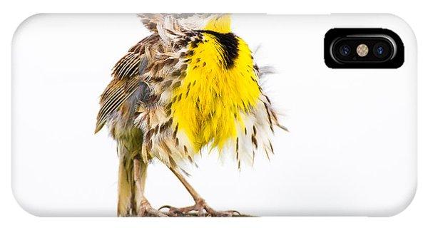 Flluffy Meadowlark IPhone Case