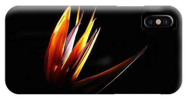 Flor Encendida Detalle IPhone Case