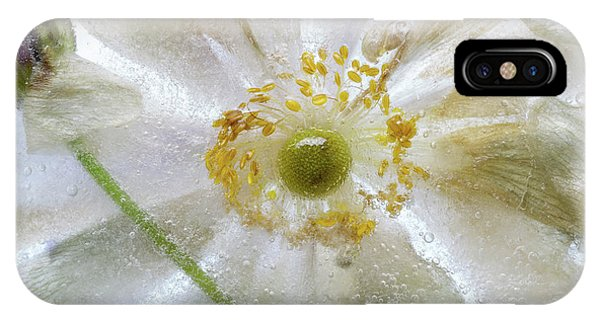 Freeze iPhone Case - Floral Freeze by Mandy Disher