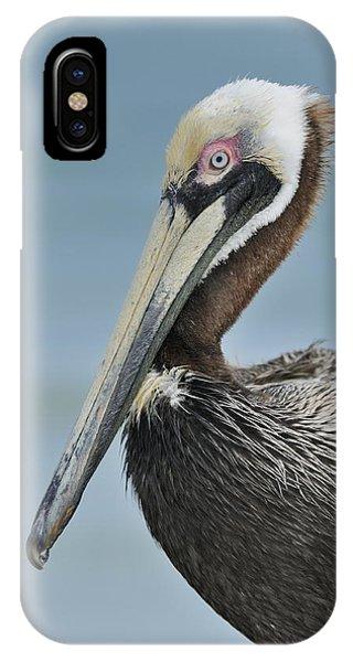 Florida Brown Pelican IPhone Case