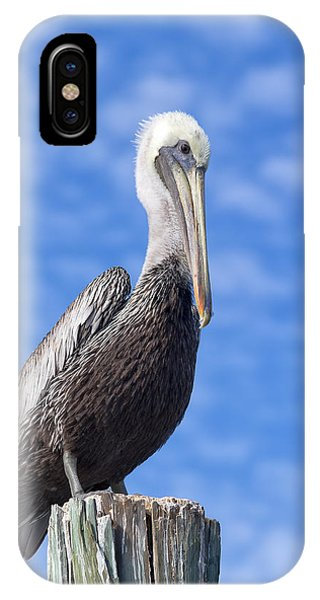 Florida Brown Pelican IPhone Case