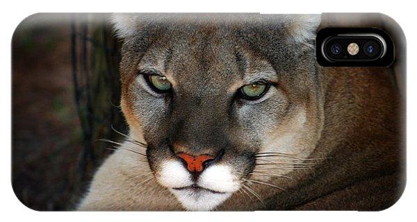 Florida Panther IPhone Case