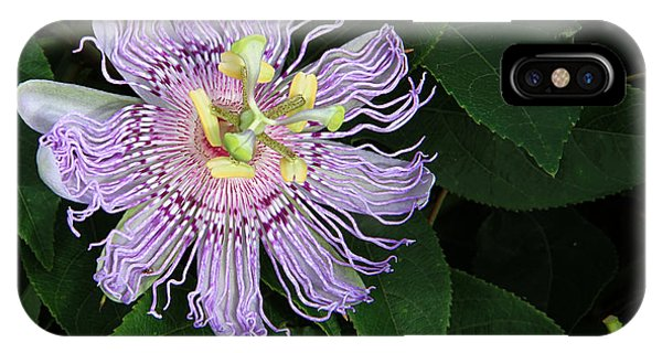 Florida Passion Flower IPhone Case