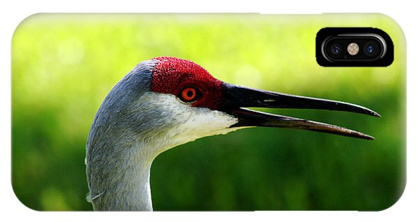 Florida Sandhill Crane IPhone Case