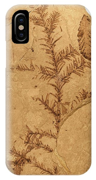 North London iPhone Case - Florissant Formation Plant Fossil by Natural History Museum, London/science Photo Library