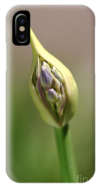 Flower-agapanthus-bud IPhone Case