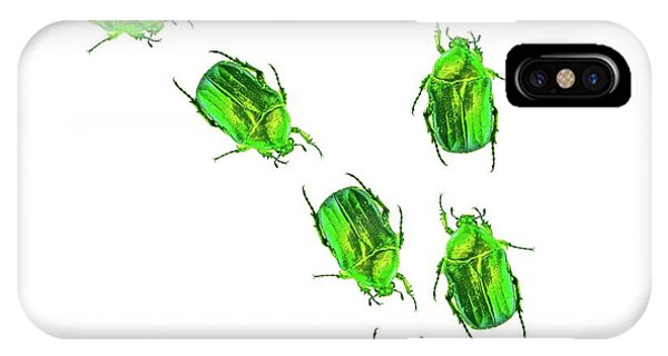 Coleoptera iPhone Case - Flower Chafer Beetles by Gombert, Sigrid