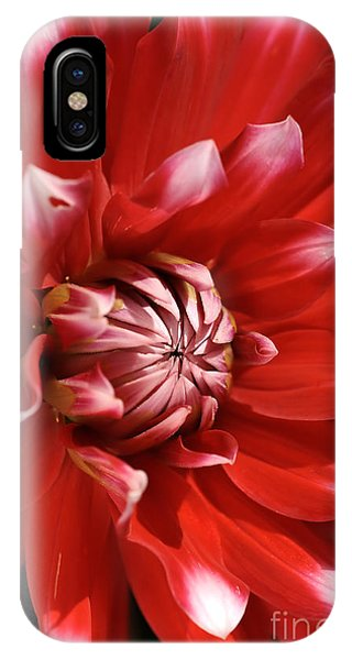 Flower- Dahlia-red-white IPhone Case