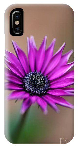 Flower-daisy-purple IPhone Case