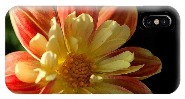 Flower In The Sun IPhone Case