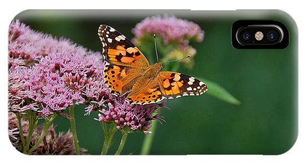Flower Kissed By Butterfly Phone Case by Judith Russell-Tooth