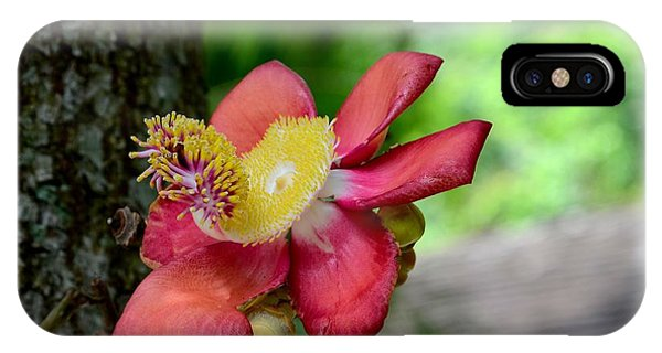 Flower Of Cannonball Tree Singapore IPhone Case