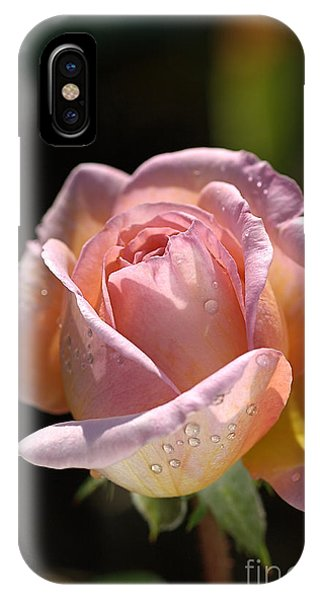 Flower-pink And Yellow Rose-bud IPhone Case