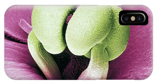 Stamen iPhone Case - Flower Stamens Of An African Violet by Science Pictures Limited/science Photo Library